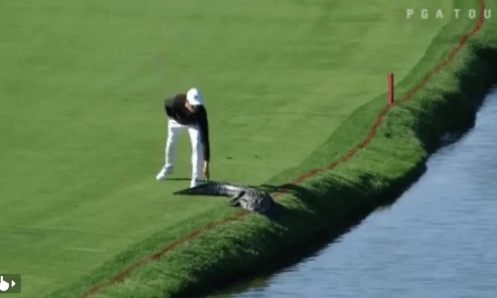 Crazy Encounter Between Golfer and Alligator